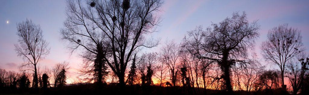 Panorama_Trees_11255px_Baryta